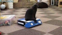 Выставочные коты смотреть видео прикол - 1:30