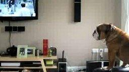 Пёс подвывает слону смотреть видео прикол - 0:31