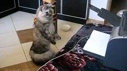 Кот-суслик смотреть видео прикол - 0:46