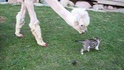 Смотреть Животная симпатия