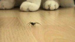 Битва паука с монстрами смотреть видео прикол - 1:08