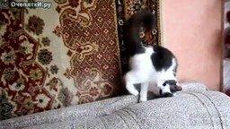 Кошачий взгляд под углом смотреть видео прикол - 0:27