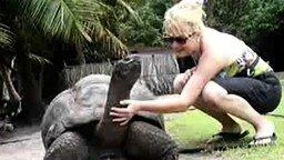 Черепаха - гигант смотреть видео прикол - 1:19