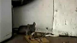 Счастливая мышка смотреть видео прикол - 0:31