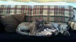 Смотреть Наглый котяра