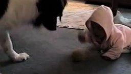 Собака учит малыша смотреть видео прикол - 0:50